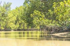 Rivière de la Gambie Photographie stock libre de droits