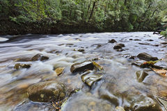 Rivière de la Tasmanie Franklin 02 Image stock