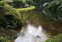 Rivière de lanscape de beauté soutenue Photos libres de droits