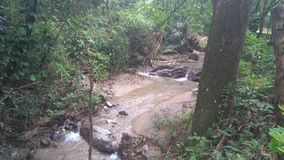 Rivière de Minca Image libre de droits