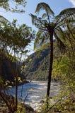Rivière de Mokihinui vue de la banque du sud par le buisson indigène image stock