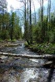 Rivière de montagne dans la forêt photos stock