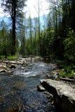 Rivière de montagne dans la forêt images stock