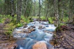 Rivière de montagne dans la forêt Photo stock