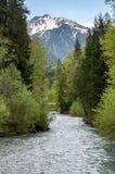 Rivière de montagne dans la forêt photos libres de droits