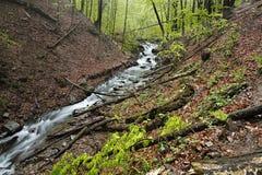 Rivière de montagne dans la forêt carpathienne sauvage entre les collines Image libre de droits