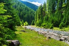 Rivière de montagne dans la forêt conifére image libre de droits
