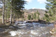 Rivière de montagne dans les Carpathiens photos libres de droits