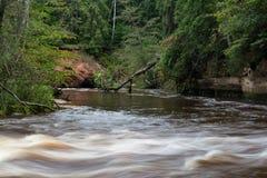 Rivière de montagne en été entourée par la forêt Photo libre de droits