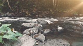 Rivière de montagne en plan rapproché de l'eau de forêt d'automne banque de vidéos