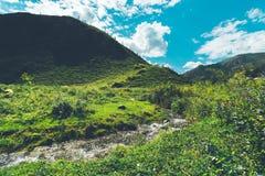Rivière de montagne entourée par les collines et l'herbe Photos libres de droits