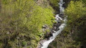 Rivière de montagne parmi les arbres sur le flanc de montagne banque de vidéos