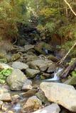 Rivière de montagne traversant la forêt photos stock
