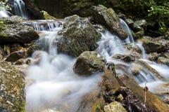 Rivière de montagne traversant le courant vert de forêt dans le bois Photographie stock libre de droits
