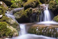 Rivière de montagne traversant le courant vert de forêt dans le bois Photographie stock