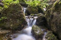 Rivière de montagne traversant le courant vert de forêt dans le bois Image libre de droits