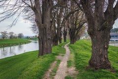 Rivière de Morava dans la République Tchèque Photographie stock libre de droits