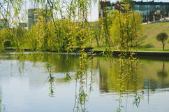Rivière de parc Images libres de droits