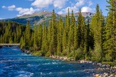 Rivière de Pipestone, montagne de whitehorn Photographie stock
