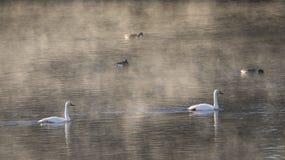 Rivière de plein hiver dans le début de la matinée image libre de droits