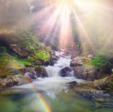 Rivière de Prut dans la forêt sauvage image stock