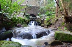Rivière de région boisée Photos libres de droits