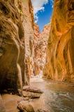 Rivière de Vierge en parc national Utah de zion Photos stock