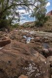 Rivière de Vierge, roches et arbres Zion National Park images stock