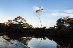 Rivière de Yacuma Jungle bolivienne Image libre de droits