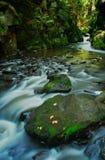 Rivière Doubrava, région de Vysocina, République Tchèque Images stock