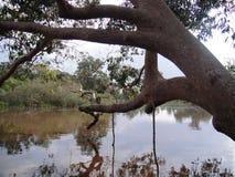 Rivière du Bornéo images stock