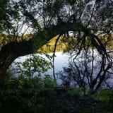 Rivière du nord incurvée en bois de réflexion d'arbre image stock