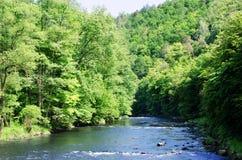 Rivière Dyje, République Tchèque photographie stock libre de droits