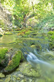 Rivière en bois en été Image stock