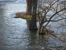 Rivière en crue en Europe centrale Les inondations et les tempêtes sont dues très commun au changement climatique L'eau, inondati photo libre de droits