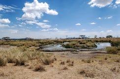 Rivière en Tanzanie avec des hippopotames Image libre de droits