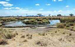 Rivière en Tanzanie avec des hippopotames Photo libre de droits