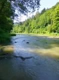 Rivière entourée par la verdure Photo stock