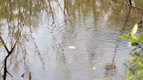 Rivière entrant doucement avec les réflexions de la lumière et la vague d'ondulation par la vue de forêt de l'arbre vert s'élevan banque de vidéos