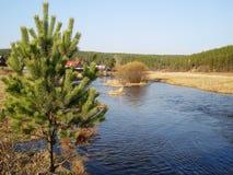 Rivière et île Photo libre de droits