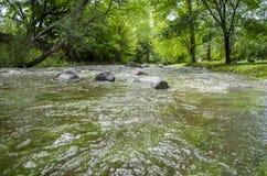 Rivière et arbres Photos stock