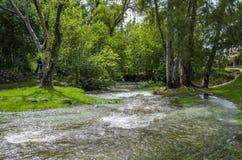 Rivière et arbres Photographie stock libre de droits