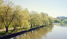 Rivière et arbres Image libre de droits