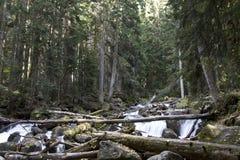 Rivière et cascade de Murudzhu parmi la forêt caucasienne en automne Images stock