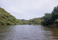 Rivière et jungle Photos stock