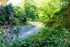 Rivière fluide dans la région boisée verte luxuriante Photographie stock libre de droits