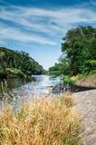 Rivière fonctionnant par la forêt Photographie stock libre de droits