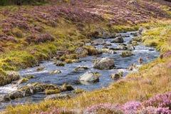 Rivière fonctionnant par une gorge écossaise de bruyère Photos libres de droits