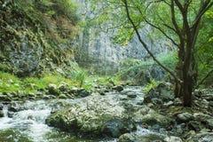 Rivière froide en montagnes de la Transylvanie Images libres de droits
