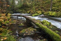 Rivière Großer REGEN en Bavière, Allemagne Photographie stock libre de droits